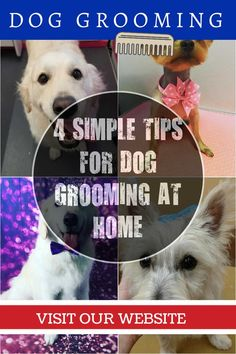 Grooming Your Dog at Home - Basic Tips in Taking Care of Your Pet Dog *** Click image to read more details. #DogGroomingTips #doggroomingathome
