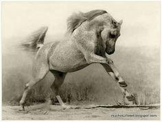 Le+cheval+arabe.jpg 400×302 pixels