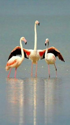 Photo Pretty Birds, Love Birds, Beautiful Birds, Animals Beautiful, Animals And Pets, Funny Animals, Cute Animals, Exotic Birds, Colorful Birds