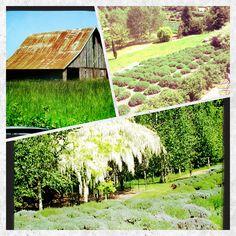 Weekend Garden Adven