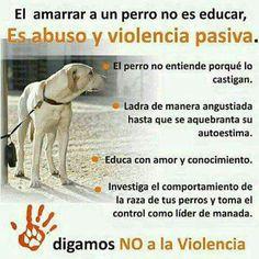 Amarrar a un perro es abuso y violencia