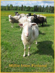 Kristillisen pääsiäisen esikuva on ollut juutalaisten passah- tai pesah-juhla, jolloin syötiin lampaasta valmistettu ateria. Sana pesah juontaakin juurensa pääsiäiskaritsaa merkitsevästä sanasta. Juhlaa vietettiin israelilaisten Egyptin orjuudesta vapautumisen muistoksi ja osattomien kutsuminen aterialle on perinteisesti ollut keskeinen ajatus. Olisiko sinullakin mahdollista tänä pääsiäisenä tarjota vähävaraiselle pääsiäisateria muodossa tai toisessa - rahalahjoituksena tai pienenä…