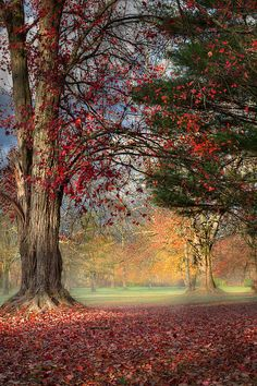 ~~Fall Morning in the Park ~ first rays of light burning off the fog, New Milford, Connecticut by Bill Wakeley~~