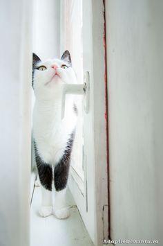 Curious cat at the window by Doina Badea, via 500px
