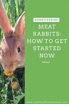 Have you thought about adding meat rabbits to your homestead? We discuss what you need to start with meat rabbits on your homestead now. Meat Rabbits Breeds, Raising Rabbits For Meat, Pig Breeds, Rabbit Breeds, Rabbit Stew, Rabbit Farm, Rabbit Cages, Rabbit Hutch Plans, Rabbit Hutches