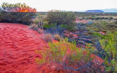 Sunrise at Uluru, Northern Territory, Australia
