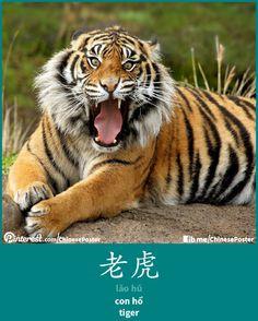 老虎 - lǎo hǔ - con hổ - tiger