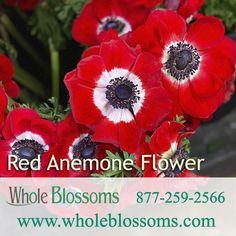 Red Anemone, Anemone Flower, Anemone Wedding, Wedding Flowers, Ranunculus Flowers, Star Of Bethlehem, Flowers Delivered, Christmas Flowers, Manzanita