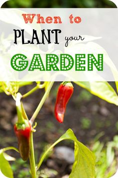 When's the best time to plant your garden? Here is a list of the crops that you can plant and when. #gardening