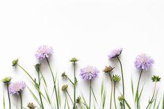 Purple Flower wall wallpaper from Happywall Watercolor Desktop Wallpaper, Spring Desktop Wallpaper, Aesthetic Desktop Wallpaper, Wallpaper Free, Plant Wallpaper, Mac Wallpaper, Macbook Wallpaper, Nature Wallpaper, Paper Wallpaper