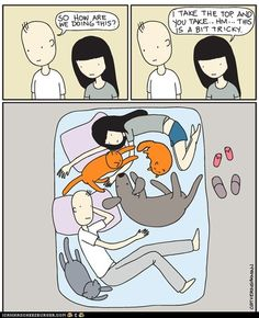 funny pictures - I Used to Look Forward to Sleepy Times.  Then I Got Pets.