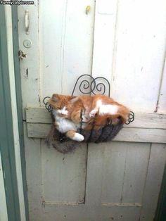 "Everyone needs a ""CAT PLANT""! JP"