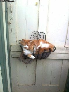 Kitty Found Another Purrfect Bed
