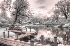 Photograph - Missouri Botanical Garden Infrared Photography St Louis Jane Linders by Jane Linders , Missouri Botanical Garden, Botanical Gardens, Infrared Photography, Japanese Garden Design, Water Element, Natural Garden, Perfect Photo, Fine Art Photography, St Louis