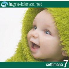 http://www.lagravidanza.net/settimane/7-settimana-di-gravidanza-il-viso-assume-fisionomia-umana