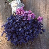 Lavender bouquet from our little lavender field. (dry)