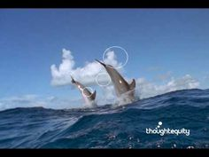 Dolphins Jumping Out of the Ocean Video - National Geographic Stock Footage :: Sonlight - Core A, Week 4 - Dolphin Adventure
