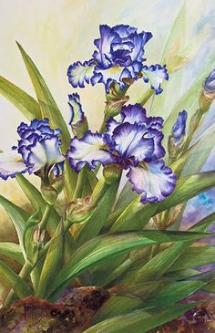 Watercolor demonstration of white & purple iris by Lisa Hll step 5