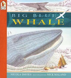 Booktopia has Big Blue Whale, Read and Wonder by Nicola Davies. Buy a discounted Paperback of Big Blue Whale online from Australia's leading online bookstore. Big Blue Whale, Wonder Book, Big Animals, Mentor Texts, Ink Illustrations, Read Aloud, Nonfiction Books, The Ordinary, Mammals