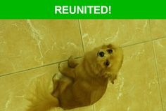 Great news! Happy to report that Wolfe has been reunited and is now home safe and sound! :)
