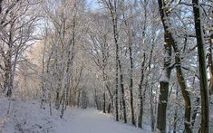 Dutch nature is as beautiful in winter as it is in summer. Take a break and plan a hiking weekend to enjoy Dutch winter landscapes. Christmas In Holland, The Hunting Ground, Visit Holland, Tourist Office, Walking Routes, Winter Walk, Seaside Resort, The Dunes, Winter Activities