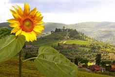 Visit Tuscany, Italy - TripBucket