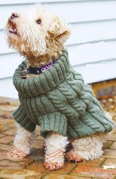 from Knitting & crochet from woman's weekly january 2016 Crochet Dog Sweater, Puppy Clothes, Animal Clothes, Wire Fox Terrier, Cat Sweaters, Dog Jacket, Cat Accessories, Cairn Terriers, Dog Dresses
