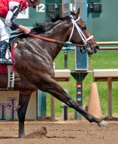 Position 19- Ride On Curlin