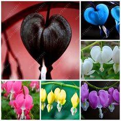 Bleeding Heart Plant, Bleeding Hearts, Flowers Perennials, Planting Flowers, Shade Perennials, Flower Seeds, Flower Pots, Exotic Flowers, Beautiful Flowers