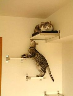 DIY cat perch made with IKEA brackets and wood