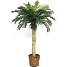 Nearly Natural Sago Palm Silk Tree 4ft 73 Liked On Polyvore Featuring Home