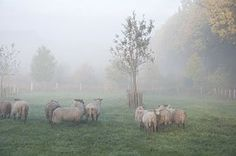 tierchen in film und bild sowie eigene erlebnisse: tiere im nebel