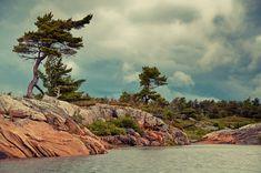 Landscape Photos, Landscape Paintings, Tree Paintings, Landscapes, Pictures To Paint, Cool Pictures, Stone Landscaping, Algonquin Park, Canadian Art