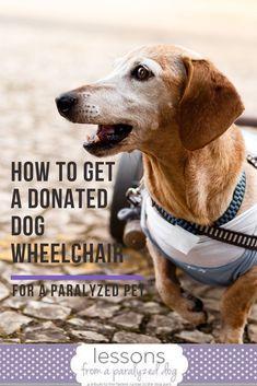 ce2104881 43 Best DIY Dog Wheelchairs images in 2019   Diy dog wheelchair, Dog ...