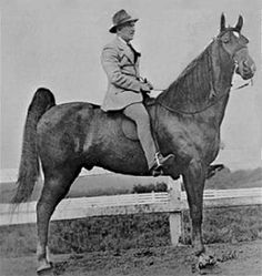 Strolling Jim 1939 The First World Grand Champion TWH