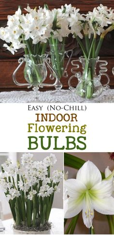 Fragrant vases of paperwhites and gorgeous, tall amaryllises! Be sure to plan ahead to have flowers in bloom in time for a special occassion. These bulbs are simple to grow, do not require chilling, and look gorgeous for weeks. If you've never tried forcing bulbs, now is the time. Enjoy!