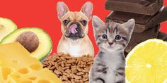 The most dangerous foods you should never feed your pets