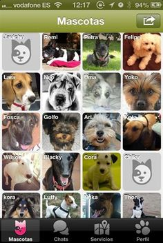 Doggy Talky, la red social para amantes de los cánidos   BolsaSpain