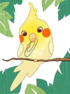 Adorable Cockatiel! Adorable Ninfa! かわいいオカメインコ!
