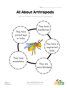 Arthropods: Insects, Arachnids, and Crustaceans Worksheet