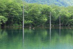 2014-07-02  大正池  初めての上高地♪  いいお天気から一転、すごい雨になりましたが!やはり山は最高です(*^^*)