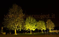 ALMA Project @ Villa Corsini a Mezzomonte -tree trees uplights 11