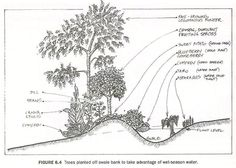 Useful traditional skills 2: water harvesting