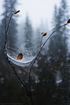 moonlightrainbow — phantomdear: thebeldam: (via lori-rocks) Mother Earth, Mother Nature, Spider Art, Spider Webs, The Ancient Magus Bride, Beautiful World, Bald Eagle, Mists, Nature Photography