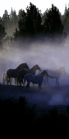"""Horses: """"In The Mist."""""""