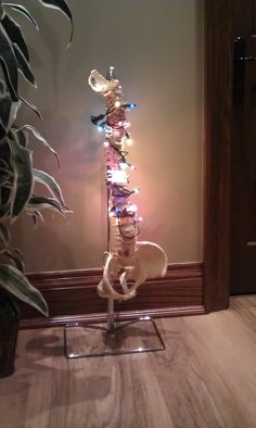 This was at my chiropractor's office over Christmas