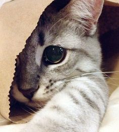 To you and me, it's a paper bag. But to a cat, it's a Ninja Cave.
