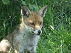 Favourite fox photo I have taken