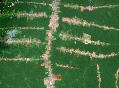 Drones to scan the Amazon rainforest for hidden civilizations