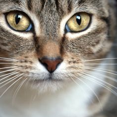 Maggie by Kimberly Palmer. THose have got to be the most gorgeous cat-eyes I have ever seen. They are perfect.